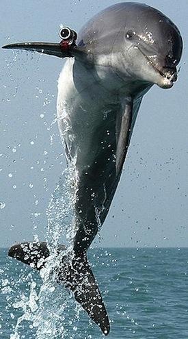 tech_dolphin