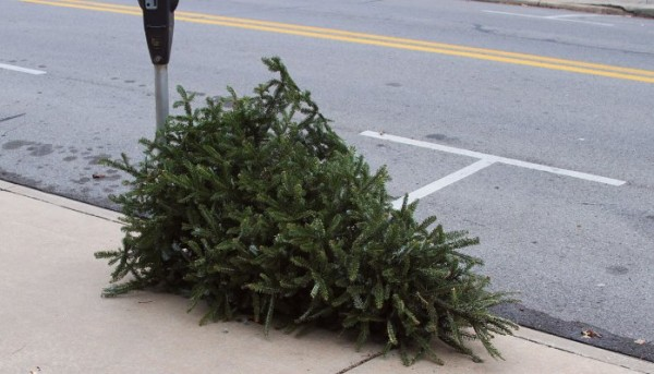 Dead Christmas Trees and Security Holes