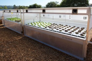 "CityBloom's hydroponic ""microfarms"" in Santa Cruz at Plantronics, Inc. (Credit: CityBlooms)"