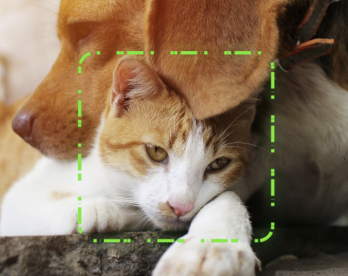 Facial recognition technology for lost pets?