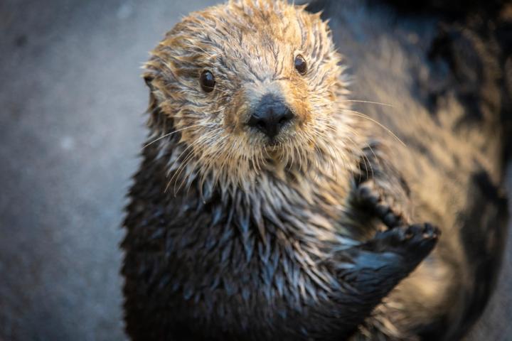 Gidget the otter