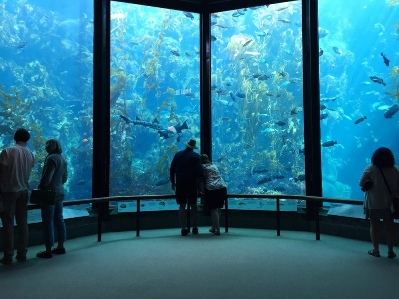 groups of people standing apart in front of the Kelp Forest at the Monterey Bay Aquarium