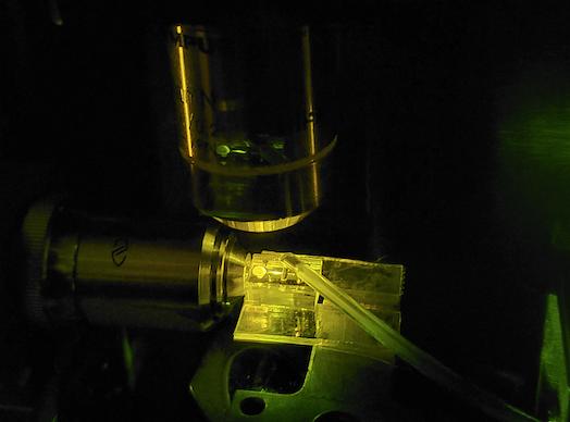 Applied Optics Lab creates novel on-chip laser source useful for biodetection