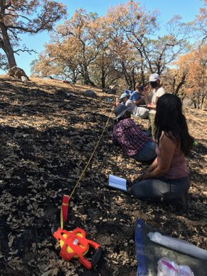 Wildfire brings destruction and opportunity to researcher's field site
