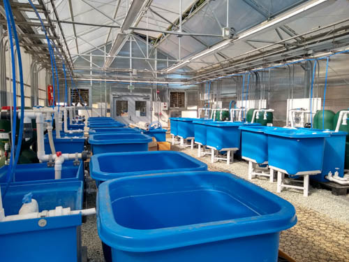 Grant funding will advance aquaculture research in UCSC's new state-of-the-art facility