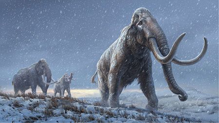 Oldest DNA sequences reveal how mammoths evolved