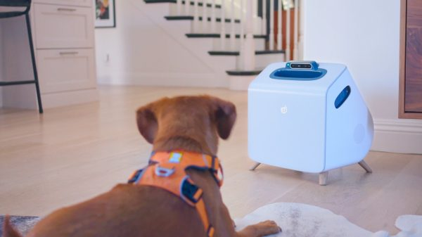Q&A: AI for dogs? What's the Companion story?